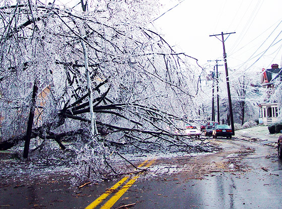 Tree downed by ice storm