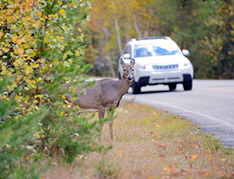 deer-thumbnail-blog